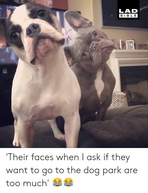 Dank, Too Much, and Bible: LAD  BIBLE 'Their faces when I ask if they want to go to the dog park are too much' 😂😂