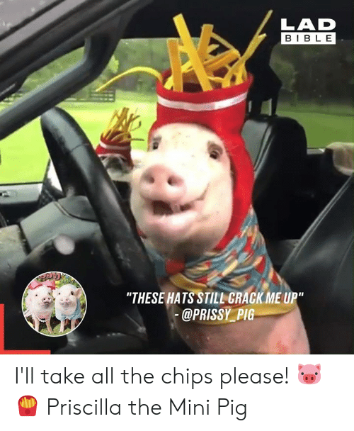 "Dank, Bible, and All The: LAD  BIBLE  ""THESE HATS STILL GRACK ME UP""  @PRISSY PIG I'll take all the chips please! 🐷🍟  Priscilla the Mini Pig"