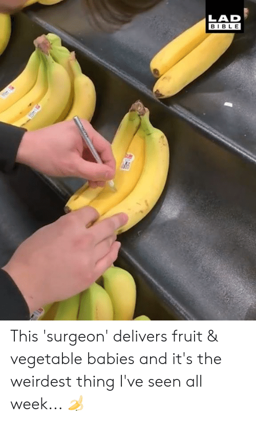 Dank, Bible, and 🤖: LAD  BIBLE This 'surgeon' delivers fruit & vegetable babies and it's the weirdest thing I've seen all week... 🍌