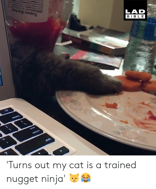Dank, Bible, and Ninja: LAD  BIBLE 'Turns out my cat is a trained nugget ninja' 🐱😂