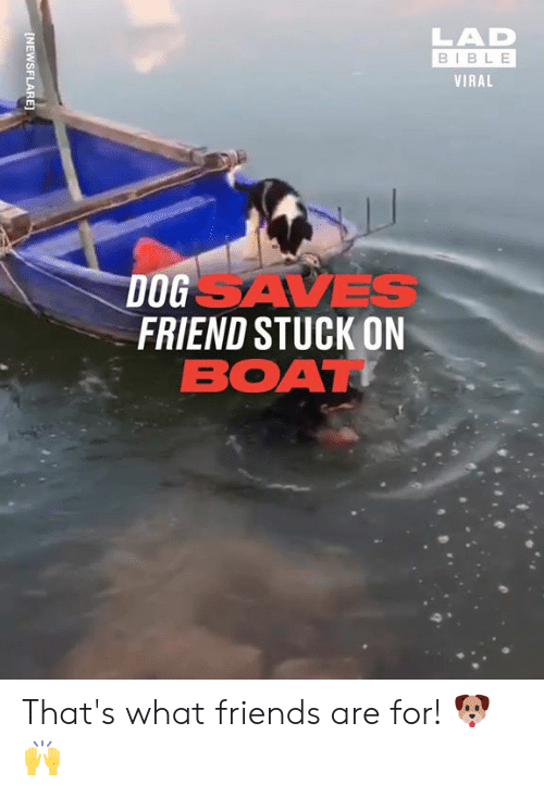 Dank, Friends, and Bible: LAD  BIBLE  VIRAL  DOGSAVES  FRIEND STUCK ON  BOAT  [NEWSFLARE] That's what friends are for! 🐶🙌