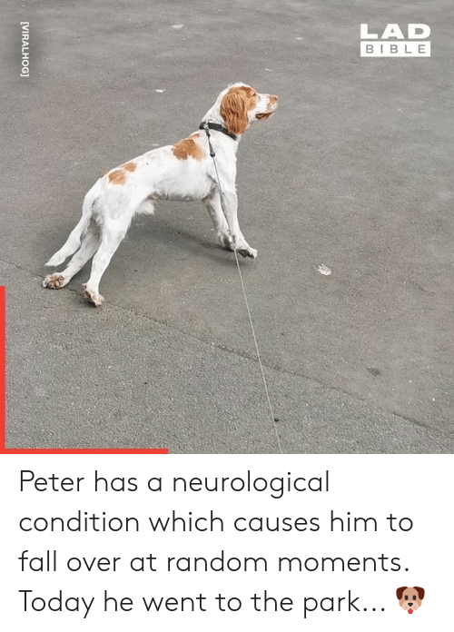 Dank, Fall, and Bible: LAD  BIBLE  [VIRALHOG] Peter has a neurological condition which causes him to fall over at random moments. Today he went to the park... 🐶