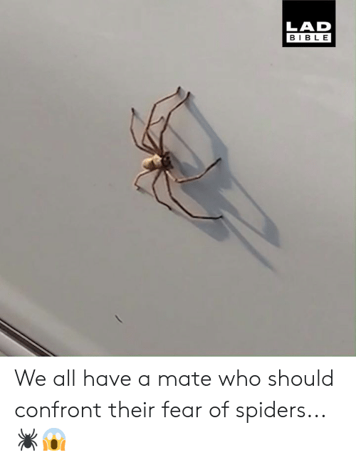 Dank, Bible, and Spiders: LAD  BIBLE We all have a mate who should confront their fear of spiders... 🕷️😱