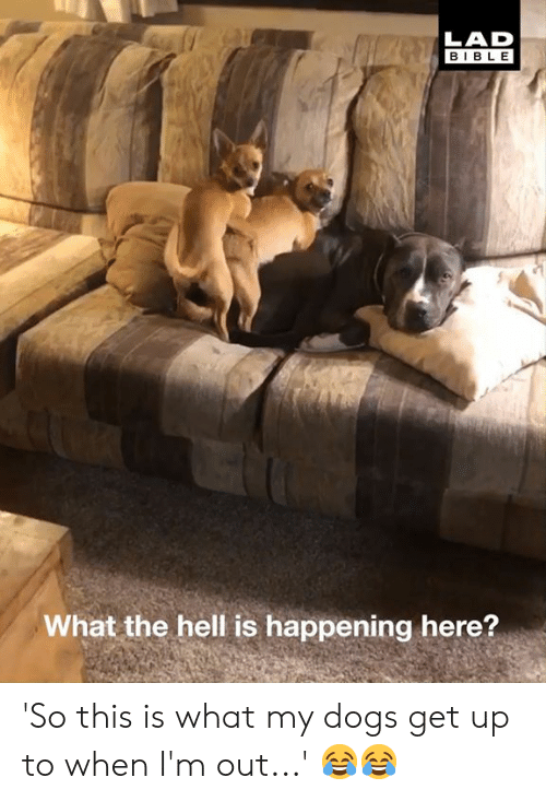 Dank, Dogs, and Bible: LAD  BIBLE  what the hell is happening here? ' 'So this is what my dogs get up to when I'm out...' 😂😂