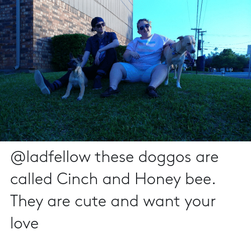 Cute, Love, and Honey: @ladfellow these doggos are called Cinch and Honey bee. They are cute and want your love