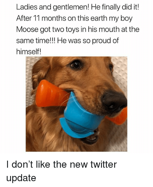 Memes, Twitter, and Earth: Ladies and gentlemen! He finally did it!  After 11 months on this earth my boy  Moose got two toys in his mouth at the  same time!!! He was so proud of  himself! I don't like the new twitter update