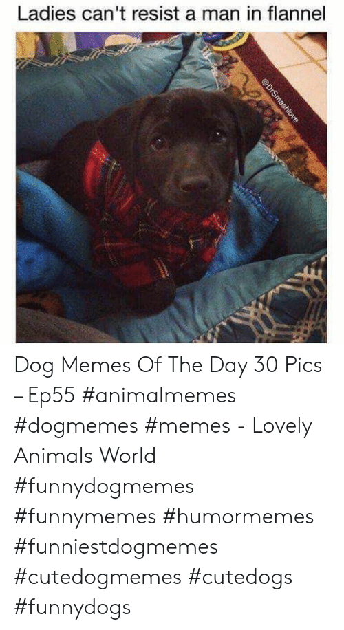 Animals, Memes, and World: Ladies can't resist a man in flannel  @DrSmashlove Dog Memes Of The Day 30 Pics – Ep55 #animalmemes #dogmemes #memes - Lovely Animals World #funnydogmemes #funnymemes #humormemes #funniestdogmemes #cutedogmemes #cutedogs #funnydogs