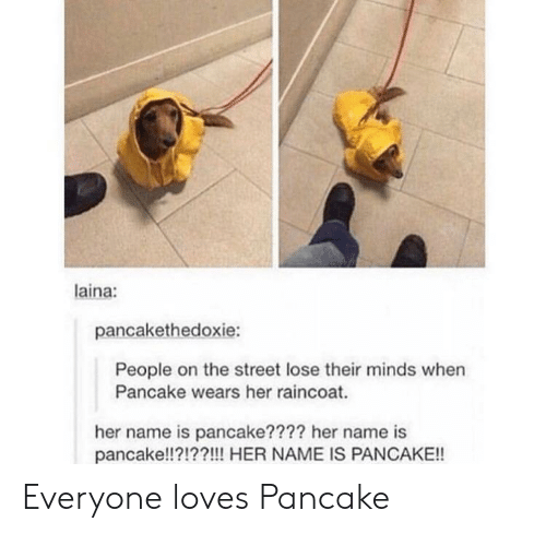 Her, Name, and The Street: laina:  pancakethedoxie:  People on the street lose their minds when  Pancake wears her raincoat.  her name is pancake???? her name is  pancake!!?!??!!! HER NAME IS PANCAKE!! Everyone loves Pancake