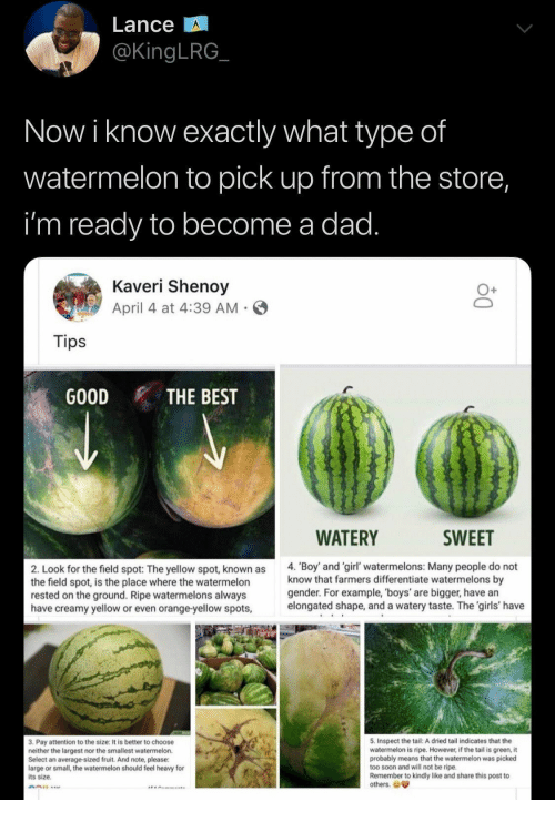 Dad, Girls, and Soon...: Lance  @KingLRG  Now i know exactly what type of  watermelon to pick up from the store,  i'm ready to become a dad.  Kaveri Shenoy  April 4 at 4:39 AM  Tips  GOOD  THE BEST  WATERY  SWEET  4. 'Boy and 'girl' watermelons: Many people do not  know that farmers differentiate watermelons by  gender. For example, 'boys' are bigger, have an  elongated shape, and a watery taste. The 'girls' have  2. Look for the field spot: The yellow spot, known as  the field spot, is the place where the watermelon  rested on the ground. Ripe watermelons always  have creamy yellow or even orange-yellow spots,  5. Inspect the tail: A dried tail indicates that the  watermelon is ripe. However, if the tail is green, it  probably means that the watermelon was picked  too soon and will not be ripe.  Remember to kindly like and share this post to  others.  3. Pay attention to the size: It is better to choose  neither the largest nor the smallest watermelon.  Select an average-sized fruit. And note, please:  large or small, the watermelon should feel heavy for  its size.