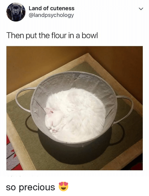 Precious, Relatable, and Bowl: Land of cuteness  @landpsychology  Then put the flour in a bowl so precious 😍