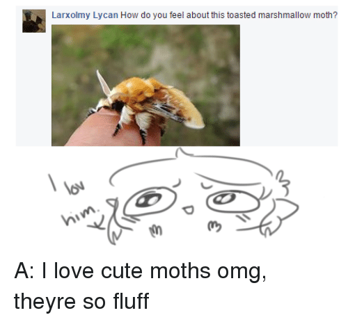 Cute Moths