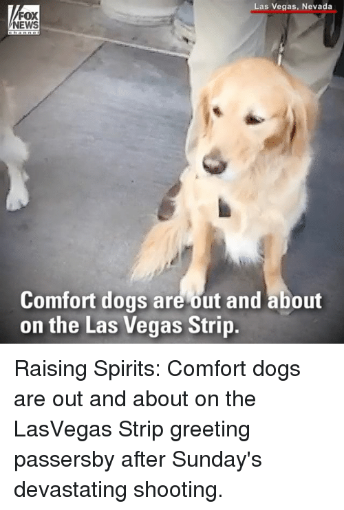 Dogs, Memes, and News: Las Vegas, Nevada  FOX  NEWS  Comfort dogs are out and about  on the Las Vegas Strip Raising Spirits: Comfort dogs are out and about on the LasVegas Strip greeting passersby after Sunday's devastating shooting.