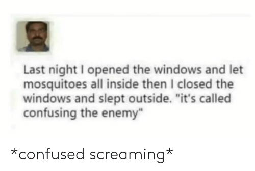 """Confused, Reddit, and Windows: Last night I opened the windows and let  mosquitoes all inside then I closed the  windows and slept outside. """"it's called  confusing the enemy"""" *confused screaming*"""