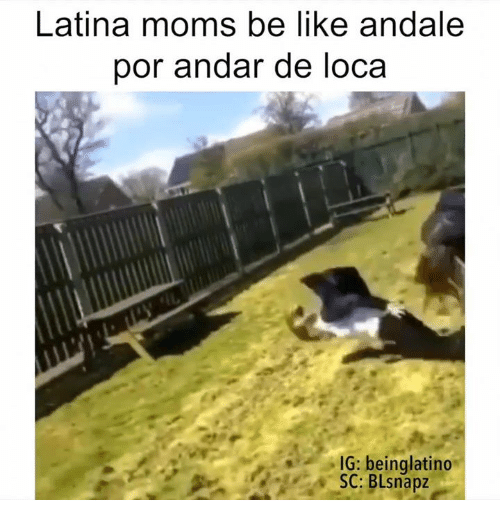andale latin singles Andale, puerto vallarta: see 666 unbiased reviews of andale, rated 4 of 5 on tripadvisor and ranked #124 of 1,161 restaurants in puerto vallarta.