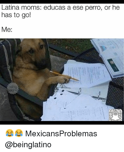 Memes, Moms, and 🤖: Latina moms: educas a ese perro, or he  has to go!  Me: 😂😂 MexicansProblemas @beinglatino