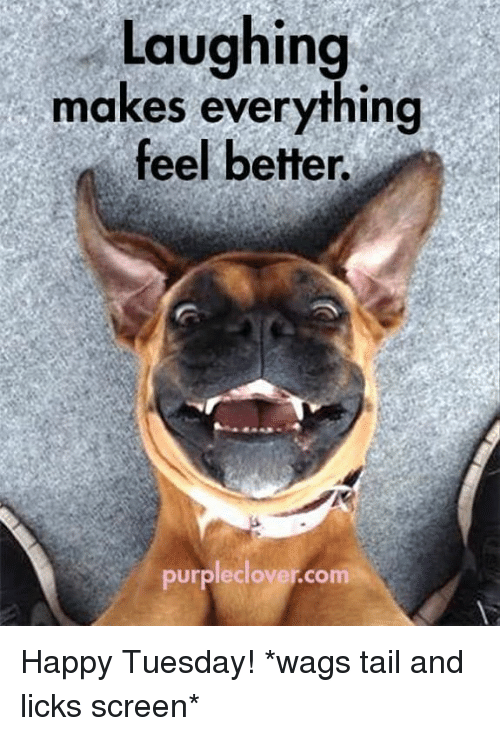 laughing makes everything feel better purpleclover com happy tuesday wags 6736778 laughing makes everything feel better purpleclover com happy