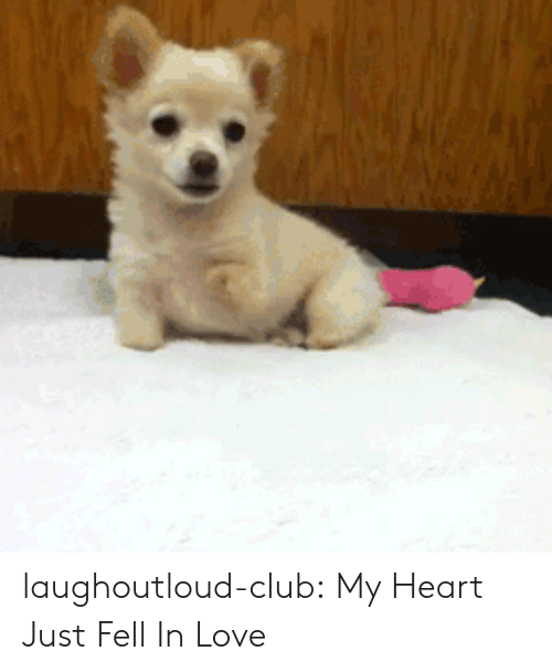 Club, Love, and Tumblr: laughoutloud-club:  My Heart Just Fell In Love