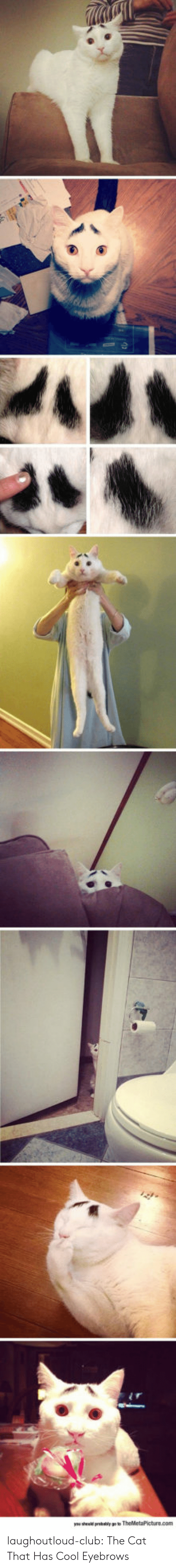 Club, Tumblr, and Blog: laughoutloud-club:  The Cat That Has Cool Eyebrows