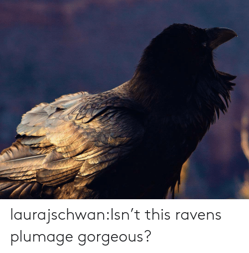 Tumblr, Blog, and Gorgeous: laurajschwan:Isn't this ravens plumage gorgeous?