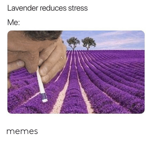 Memes, Stress, and Lavender: Lavender reduces stress  Me: memes