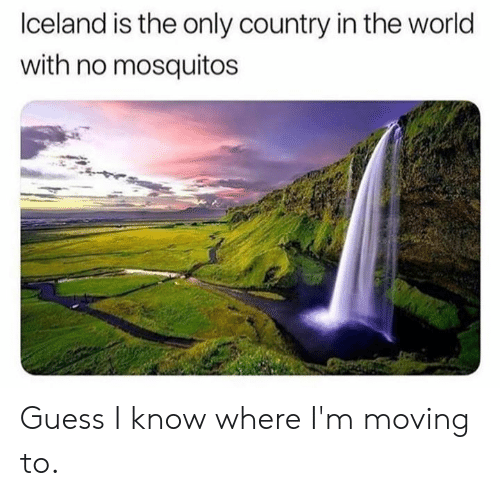 Dank, Guess, and World: lceland is the only country in the world  with no mosquitos Guess I know where I'm moving to.