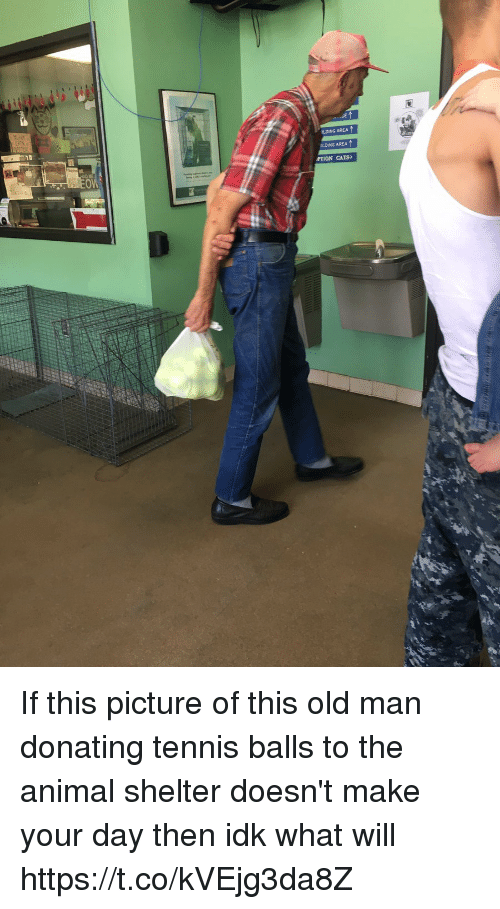 Cats, Old Man, and Animal: LDING AREA  DLDING AREA  PTION CATS If this picture of this old man donating tennis balls to the animal shelter doesn't make your day then idk what will https://t.co/kVEjg3da8Z