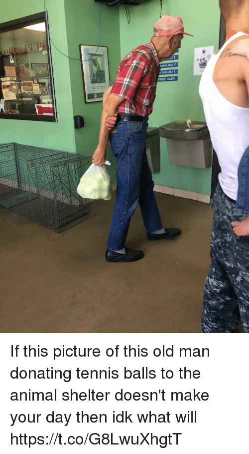 Cats, Old Man, and Animal: LDING AREA  OLDING AREA  PTION CATS If this picture of this old man donating tennis balls to the animal shelter doesn't make your day then idk what will https://t.co/G8LwuXhgtT