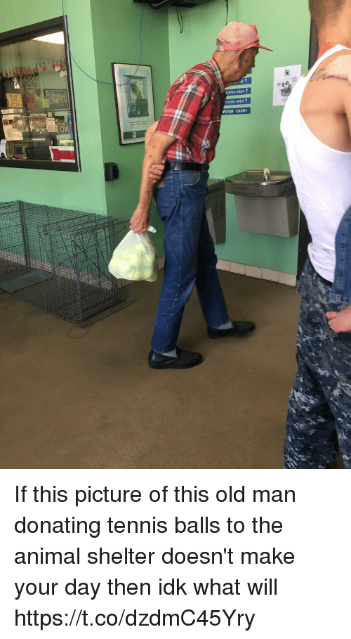 Cats, Old Man, and Animal: LDING AREA  OLDING AREA  PTION CATS If this picture of this old man donating tennis balls to the animal shelter doesn't make your day then idk what will https://t.co/dzdmC45Yry