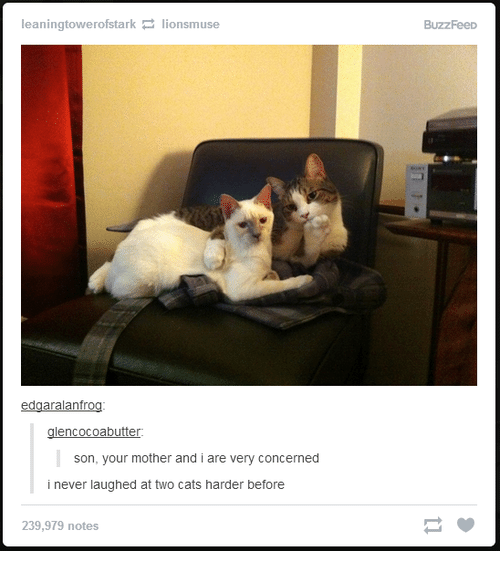 Cats, Buzzfeed, and Humans of Tumblr: leaningtowerofstark lionsmuse  edgaralanfrog  glencocoabutter:  son, your mother and i are very concerned  i never laughed at two cats harder before  239,979 notes  BuzzFeeD