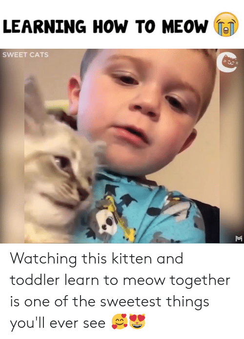 Cats, Memes, and How To: LEARNING HOW TO MEOW T  SWEET CATS Watching this kitten and toddler learn to meow together is one of the sweetest things you'll ever see 🥰😻