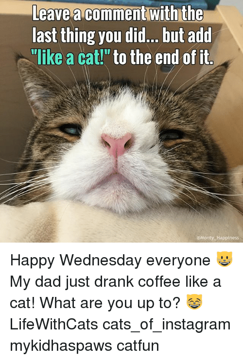 "Cats, Dad, and Instagram: Leave comment With the  last thing you did... but add  ""like a cat!"" to the end of it  Monty Happiness Happy Wednesday everyone 😺 My dad just drank coffee like a cat! What are you up to? 😸 LifeWithCats cats_of_instagram mykidhaspaws catfun"