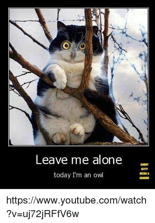 Leave Me Alone Today I'm an Owl NEEDS a