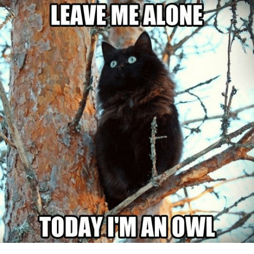 leave me alone today imanowl grumpy cat meme on me me