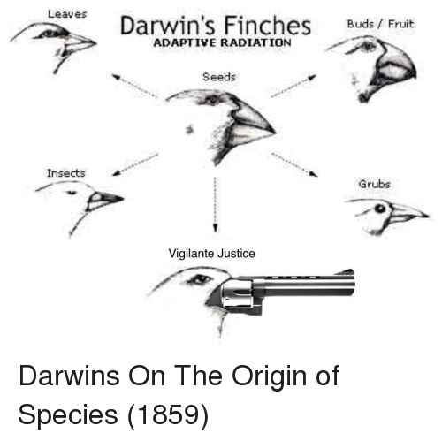 Justice, Darwin, and Species: Leaves  Darwin's Finches Buds/ Fruit  ADAPTIVE RADIATION  Seeds  Insects  Grubs  Vigilante Justice Darwins On The Origin of Species (1859)