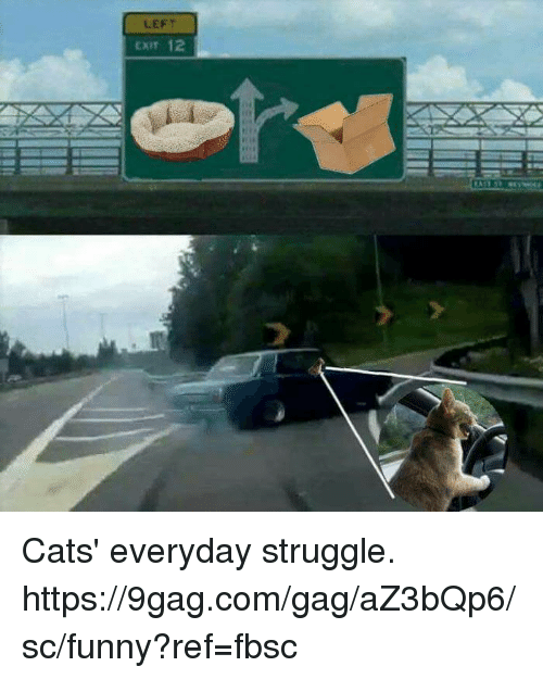 9gag, Cats, and Dank: LEFT  CXIT 12 Cats' everyday struggle.  https://9gag.com/gag/aZ3bQp6/sc/funny?ref=fbsc