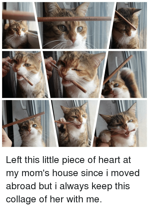 Moms, Collage, and Heart
