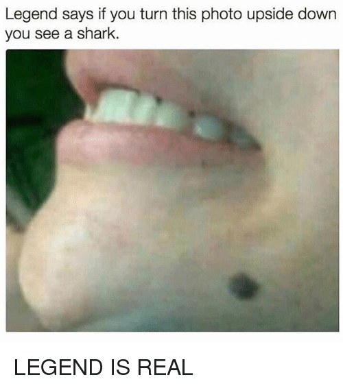 Memes, Shark, and 🤖: Legend says if you turn this photo upside down  you see a shark. LEGEND IS REAL
