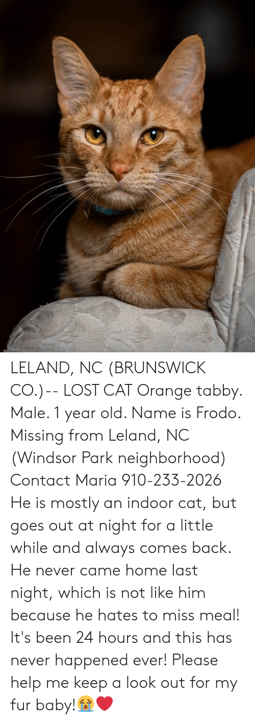 Memes, Lost, and Help: LELAND, NC (BRUNSWICK CO.)-- LOST CAT  Orange tabby. Male. 1 year old. Name is Frodo. Missing from Leland, NC (Windsor Park neighborhood)  Contact Maria 910-233-2026 He is mostly an indoor cat, but goes out at night for a little while and always comes back. He never came home last night, which is not like him because he hates to miss meal! It's been 24 hours and this has never happened ever!  Please help me keep a look out for my fur baby!😭❤