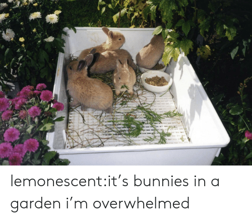 Bunnies, Tumblr, and Blog: lemonescent:it's bunnies in a garden i'm overwhelmed