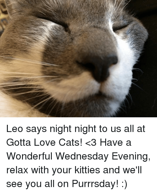Cats, Kitties, and Love: Leo says night night to us all at Gotta Love Cats! <3 Have a Wonderful Wednesday Evening, relax with your kitties and we'll see you all on Purrrsday! :)