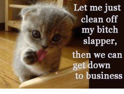 let me just clean off my bitch slapper then we 16445141 let me just clean off my bitch slapper then we can get down to,Get Down Cat Meme