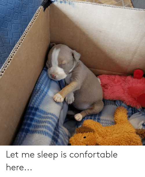 Sleep, Let Me, and  Let Me Sleep: Let me sleep is confortable here...