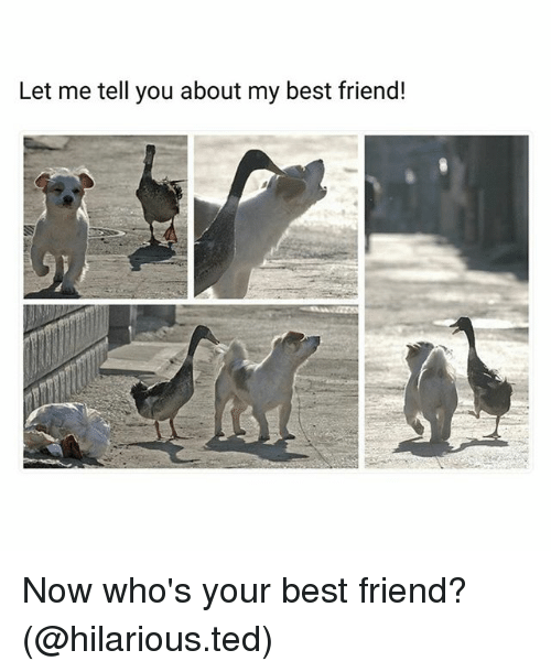 Best Friend, Funny, and Ted: Let me tell you about my best friend! Now who's your best friend? (@hilarious.ted)