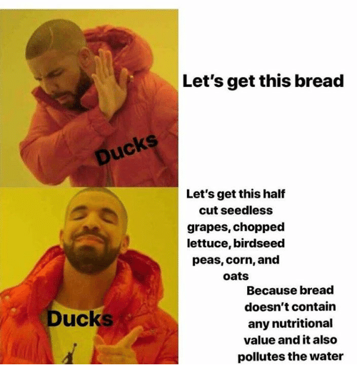 Ducks, Water, and Corn: Let's get this breac  Ducks  Let's get this half  cut seedless  grapes, chopped  lettuce, birdseed  peas, corn, and  oats  Because bread  doesn't contain  any nutritional  value and it also  pollutes the water  Ducks