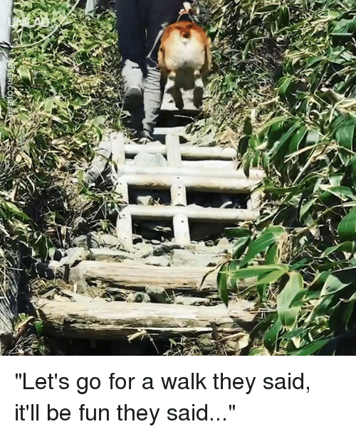 """Dank, 🤖, and Fun: """"Let's go for a walk they said, it'll be fun they said..."""""""