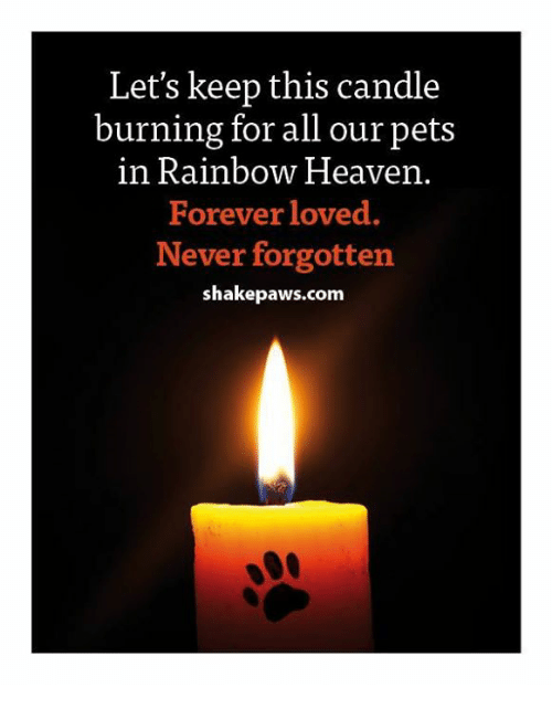 Let S Keep This Candle Burning For All Our Pets In Rainbow
