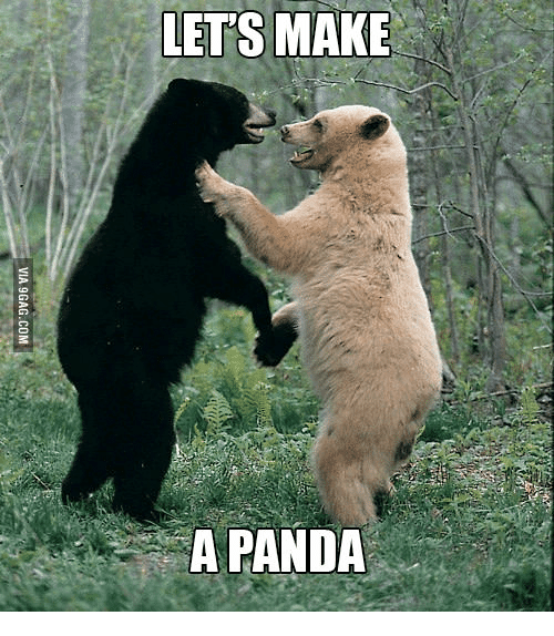 25 best memes about panda video funny panda video funny memes pandas lets make a panda and panda video funny lets make a panda via 9gag voltagebd Image collections