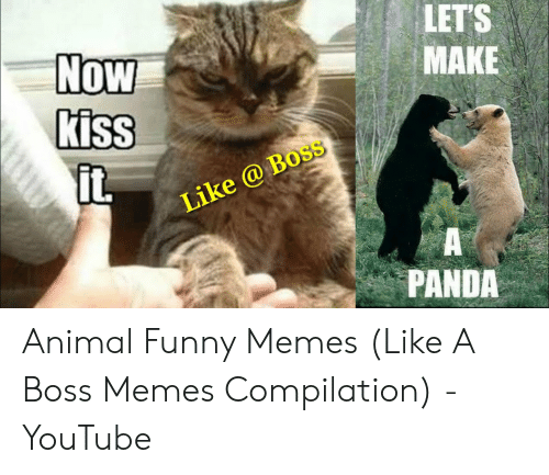Let S Make Now Kiss Like Boss Panda Animal Funny Memes Like