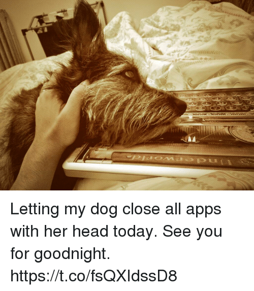 Head, Memes, and Apps: Letting my dog close all apps with her head today. See you for goodnight. https://t.co/fsQXIdssD8