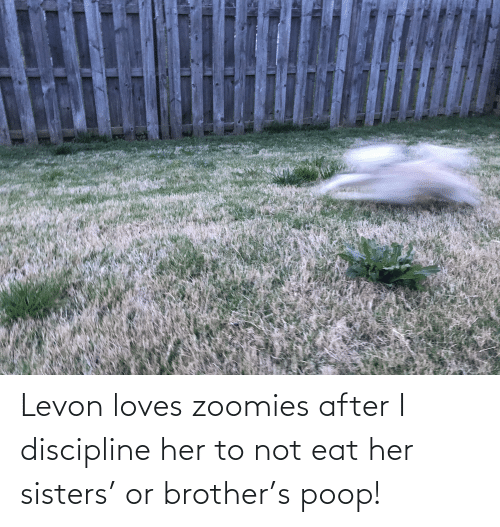 Poop, Zoomies, and Her: Levon loves zoomies after I discipline her to not eat her sisters' or brother's poop!